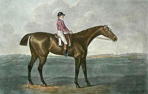 Skyscraper (horse) - Skyscraper as painted by George Stubbs, c. 1790.