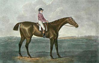Skyscraper (horse) - Skyscraper as painted by George Stubbs, c. 1790.