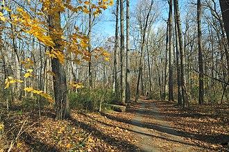 Sligo Creek Trail - Sligo Creek Trail, Forest Glen, Maryland.