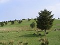 Small trees in a field - geograph.org.uk - 418070.jpg