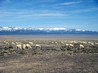 Sheep - Sheep grazing on public land (Utah, 2009)