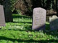Snowdrops among the graves at Wanlip Church - geograph.org.uk - 666401.jpg