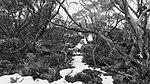 Snowfall on Kunanyi.jpg