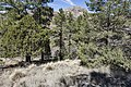 South of Ice Canyon - Flickr - aspidoscelis.jpg