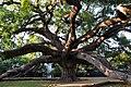 Southbank, Jacksonville, FL 32207, USA - panoramio.jpg