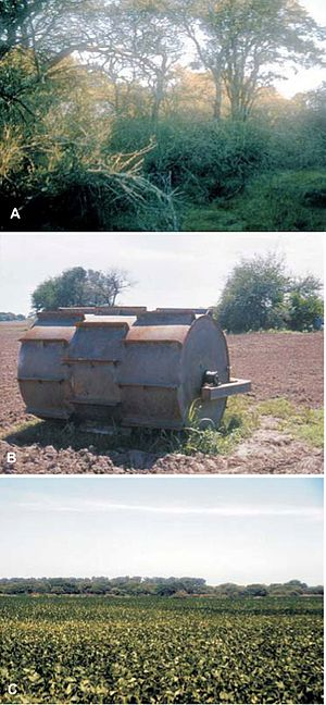 Land development - In Argentina and Bolivia, the Chaco thorn forest (A) is being felled at a rate considered among the highest in the world (B), to give way to soybean cultivation (C)