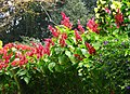 Sri Lanka - 037 - Kandy Botanical Garden (1756416375).jpg