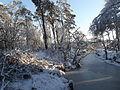 Stappersven in sneeuw 06.JPG