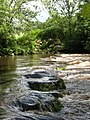 Stepping stones across the Nidd - geograph.org.uk - 471813.jpg