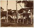 Stone Pines, Villa Pamfili Doria, Rome MET DP143534.jpg
