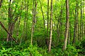 Streamside Hike (4) (14195514686).jpg