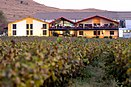 Sula Vineyards.jpg