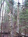 Svētes pagasts, Latvia - panoramio - Dmitrij M (6).jpg