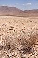Syrian Desert - Flickr - edbrambley.jpg