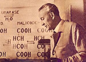 Szentgyorgyi Albert es a c vitamin keplete 1937 okt 31 Pesti Naplo