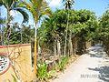 Tân Thạch, Châu Thành, Bến Tre, Vietnam - panoramio (15).jpg