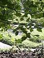 Tübingen - Neuer Botanischer Garten 19.jpg