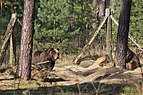 TF Wildpark Johannismuehle 03-14 img06.jpg