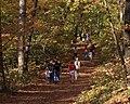 Talcott Mountain trail.jpg