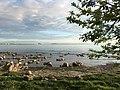 Tallinn (34176096844).jpg