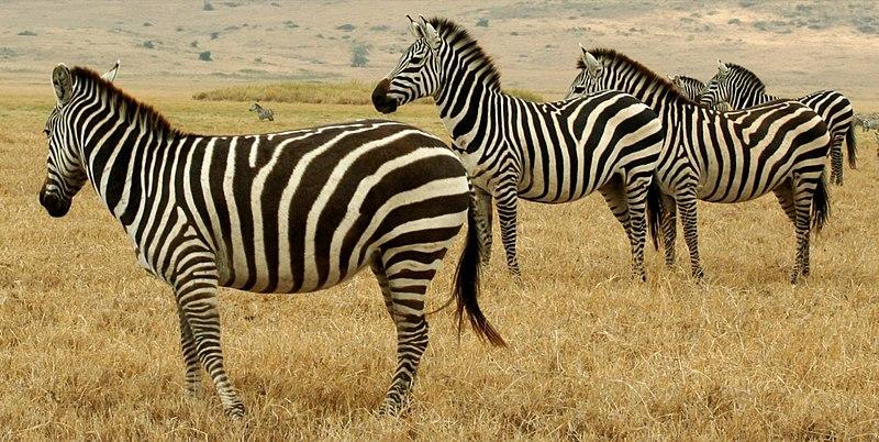 File:Tanzanian Animals.jpg