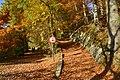 Tapis de feuilles sur les chemins (22784374656).jpg