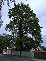 Tartu (34866636050).jpg