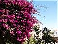 Tavira (Portugal) (32570885723).jpg