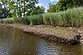 Technisch-biologische Ufersicherung an der Wümme, Versuchsstrecke 2 (50677956198).jpg