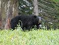 Teddy bear whistler.jpg
