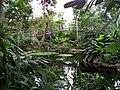 Teplice, skleník Tropicana, tropický skleník (04).jpg