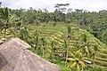 Terraced rice fields (17056542572).jpg