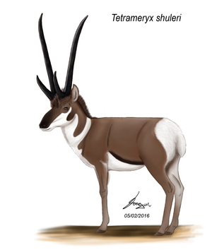 Tetrameryx - Depiction of T. shuleri based on modern pronghorns