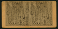 The Old Veteran, from Robert N. Dennis collection of stereoscopic views.png