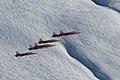 The Patrouille Suisse Team (6694636577).jpg