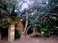 The Post Office Tree.jpg