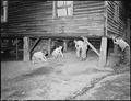 The Sergent boys and some of their friends shoot marbles underneath the Sergent's house. P V & K Coal Company, Clover... - NARA - 541356.tif