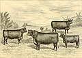 The breeds of live stock, and the principles of heredity (1887) (14780904022).jpg