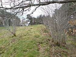 The old fort in Craig Phadrig Woods - geograph.org.uk - 389967.jpg