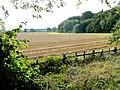 Tile Kiln Wood - geograph.org.uk - 1480217.jpg