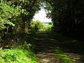 Track Leading to Crossgills - geograph.org.uk - 565281.jpg