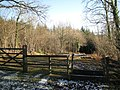 Track into forestry with motorcycle barrier, Great Haldon - geograph.org.uk - 1651616.jpg