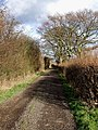 Track past Fairview Farm - geograph.org.uk - 317722.jpg