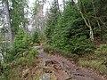 Trail at Silberteich 10.jpg