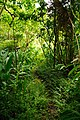 Trail to Aihualama Falls (5170650999).jpg