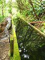 Trail to Lago do Fogo, São Miguel Island, Azores - panoramio - Eduardo Manchon (19).jpg