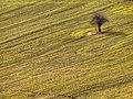Tree-05767.jpg