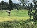 Tree houses in a village near Kabini River.jpg