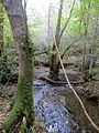Tree in the middle of the stream - Oct 2014 - panoramio.jpg