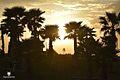 Tree silhouettes photography.jpg